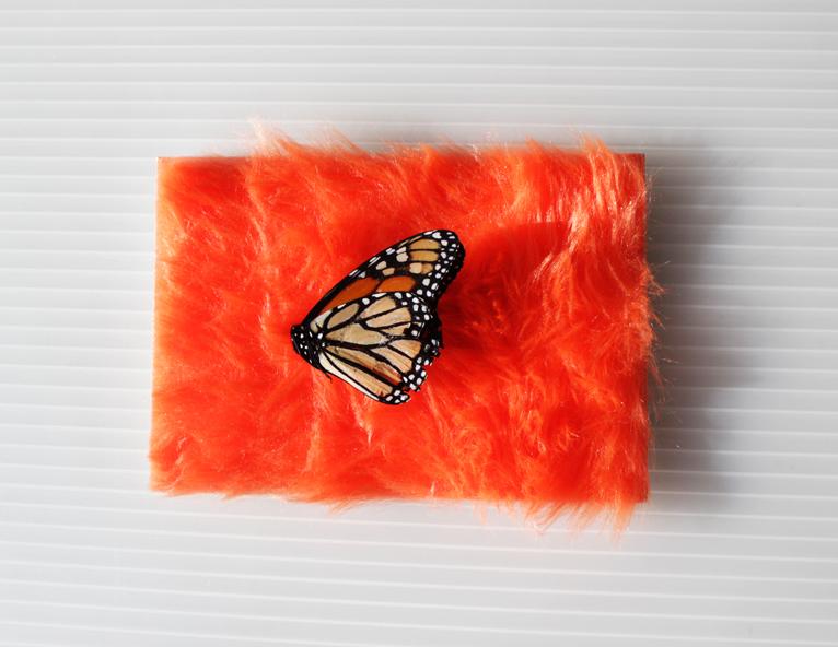 butterflyaltar